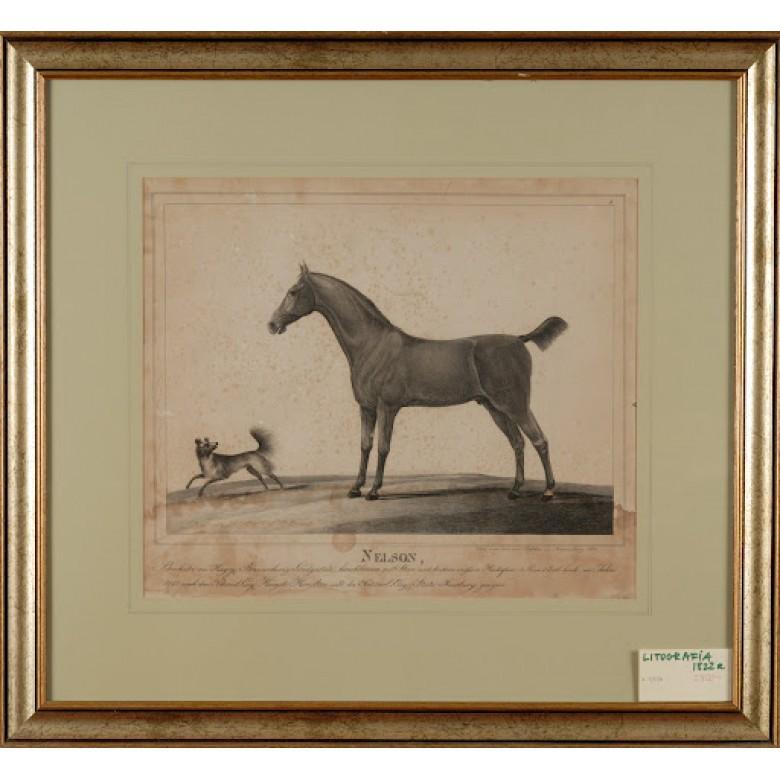 Nelson, autor nieznany. Litografia. Niesygnowana. 1828 r.